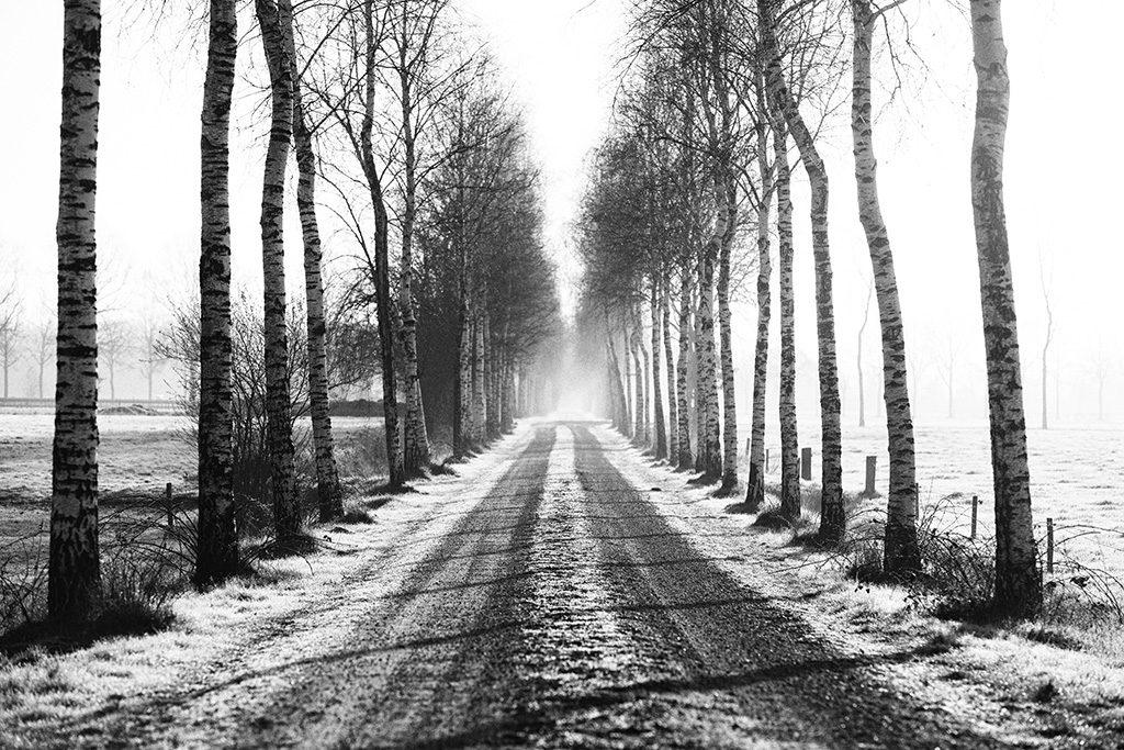 Wenum Wiesel by Adriaan Holsappel